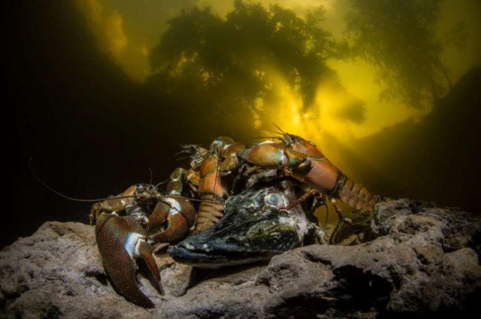 Потрясающие работы фотографов - участников конкурса The Underwater Photographer Of The Year