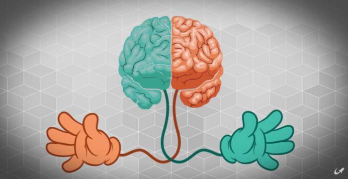 Ученые наконец то узнали, почему люди делятся на правшей и левшей