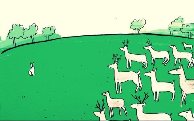 7 странных фактов о животных, в которые верится с трудом