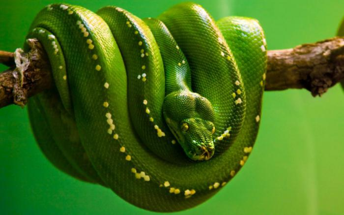 Действительно ли змеи настолько страшны, как нам кажется?