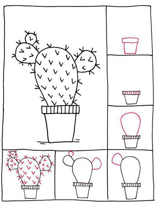 Как нарисовать кактусы: разные изображения, поэтапно