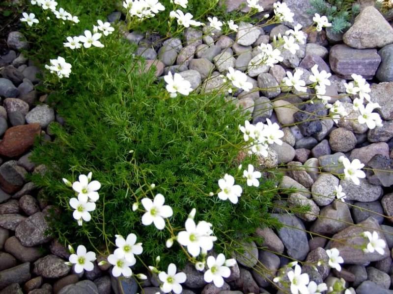 Почвопокровные растения: лучшее решение для укромных уголков сада