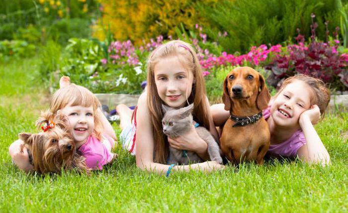 Животные и ребенок. Лучшие кошки и собаки для квартиры и детей