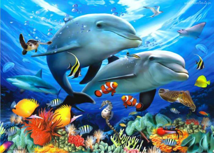 Чего раньше не рассказывали о дельфинах?