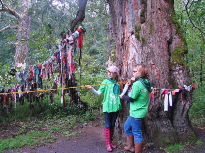 10 невероятных фактов о деревьях