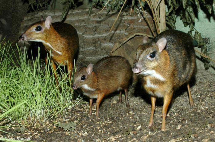 7 необычных животных, которых можно встретить только на Филиппинах