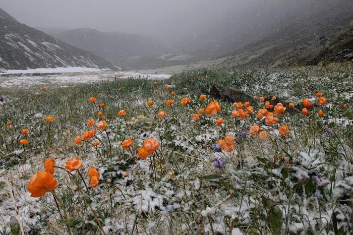 Луковые горы Алтайского края
