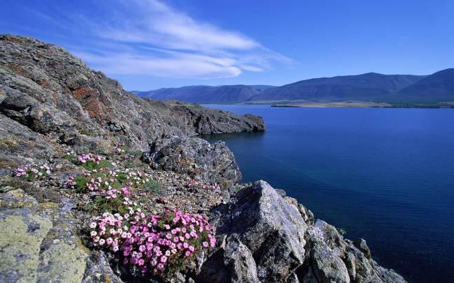 Природа Байкала: растения и животные. Озеро Байкал