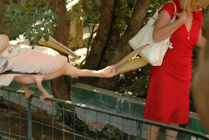 18 позитивных снимков, доказывающих, что зоопарке может быть очень весело
