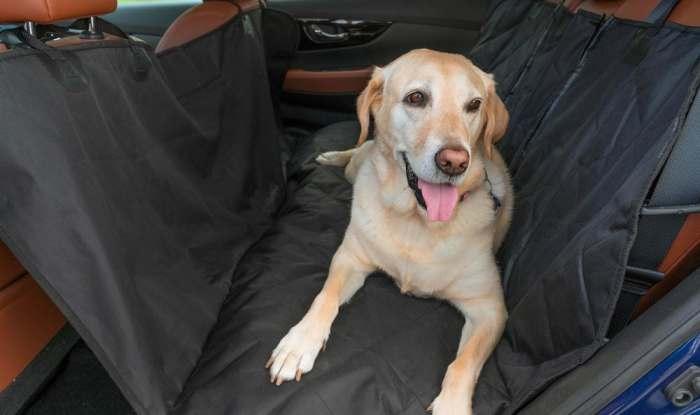 Компания Nissan создает первый в мире багажник для собак