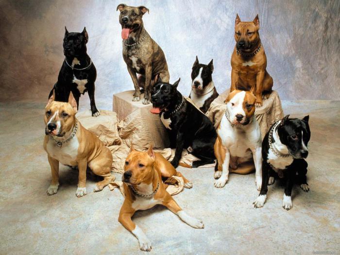 Что делать, если соседская собака беспрерывно лает