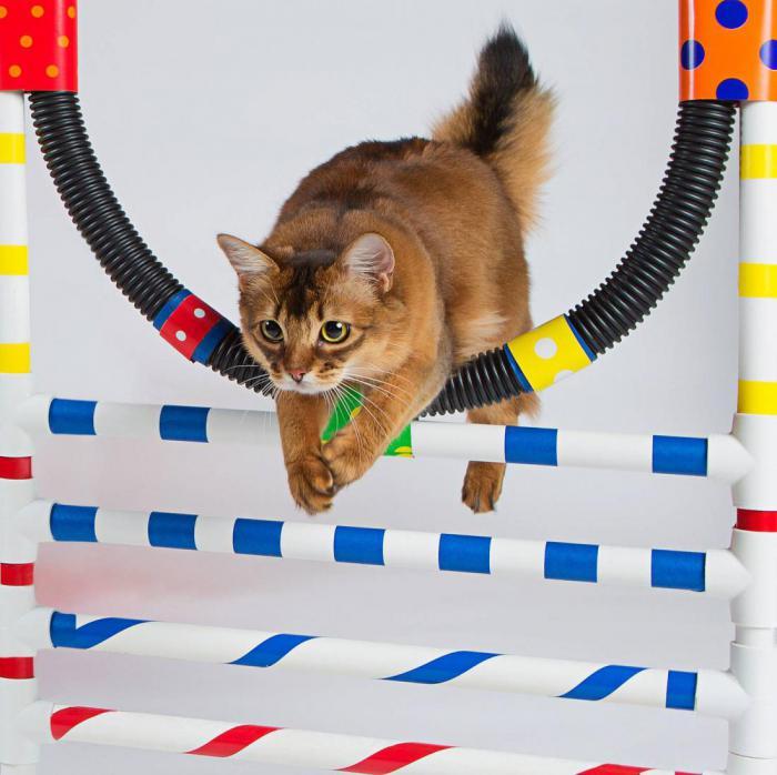 Чему можно научить кота?