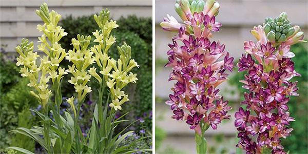 7 «несчастливых» растений, которые нельзя держать дома