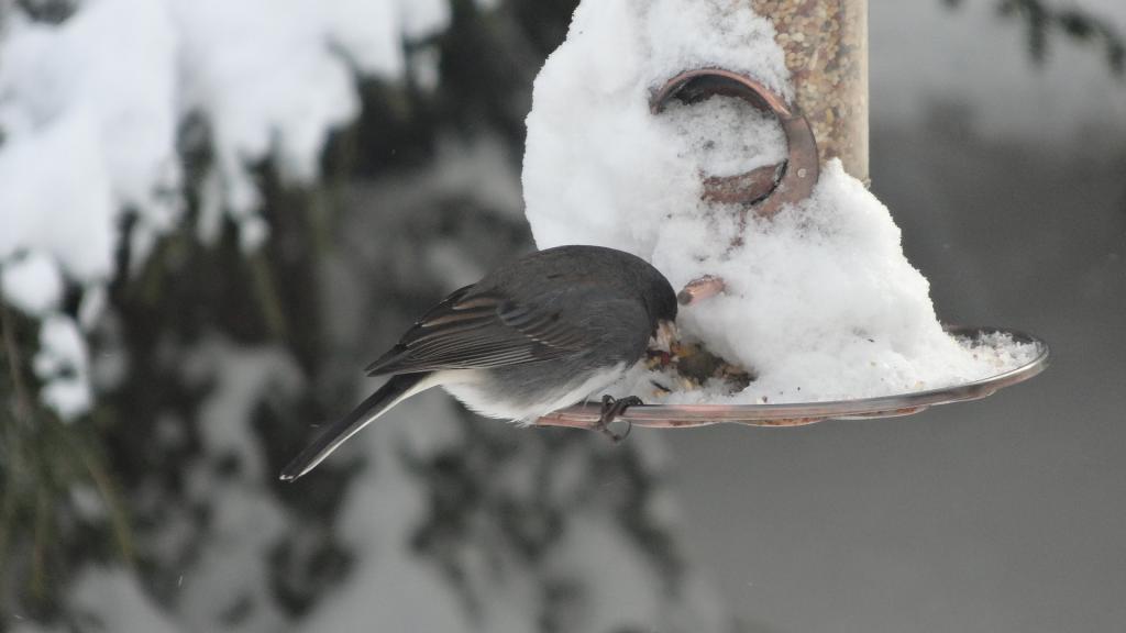 Как помочь зимующим птицам зимой?