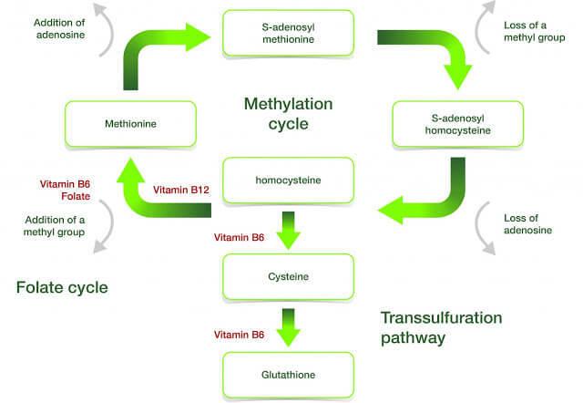 Метилирование и детоксикация: ЧТО нужно знать