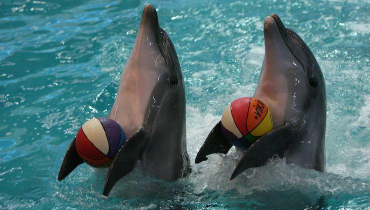 Где находится дельфинарий в Ростове-на-Дону?