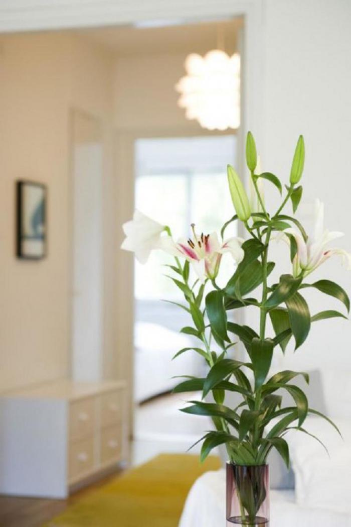 10 вещей в доме, которые могут навредить здоровью вашего питомца