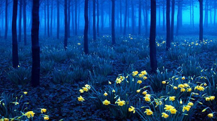 39 чудес природы: однажды увидев, вы никогда не забудете их