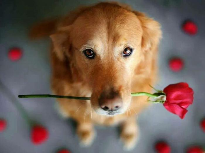 9 советов, которые помогут вам лучше понять свою собаку