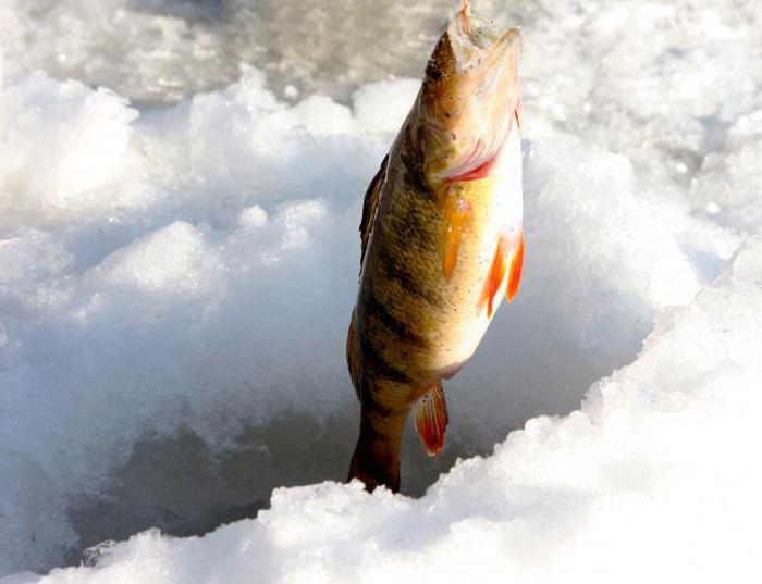Рыбалка в Рязанской области на Оке и других водоемах