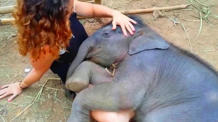 Почему слоны спят только два часа в сутки?