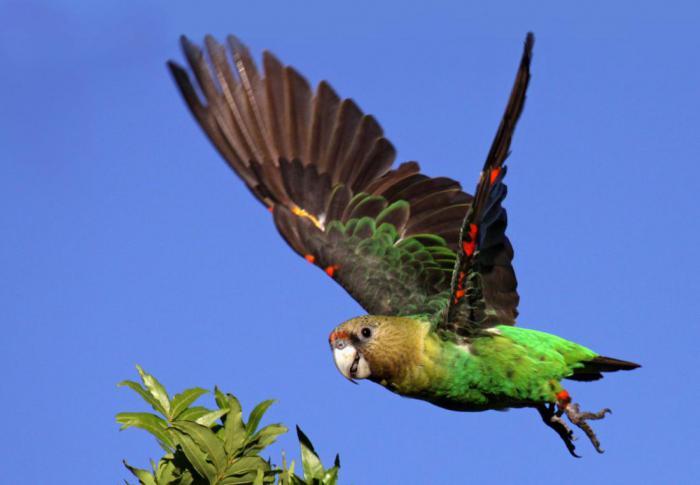 10 фактов о попугаях, которых вы не знали