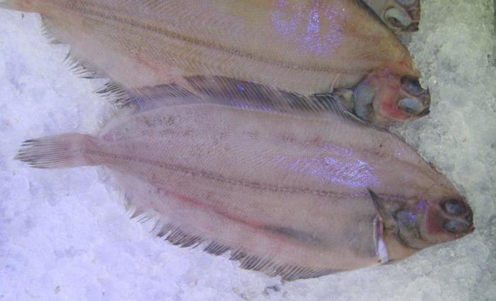 Почему нельзя употреблять эти виды рыбы?