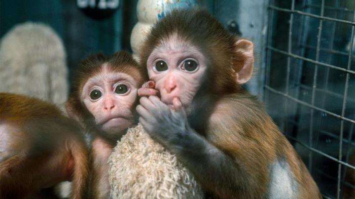 Собаки и обезьяны судят о вас на основании того, как вы относитесь к другим
