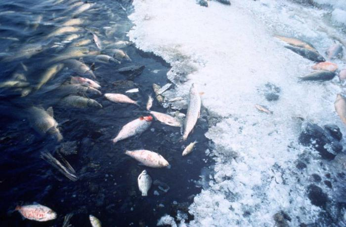Уровень кислорода в океанах падает из-за изменения климата