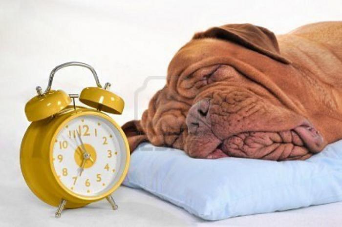 Неужели у собак есть чувство времени?
