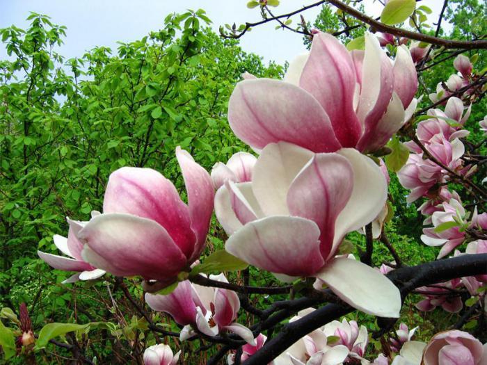 15 самых популярных цветов во всем мире