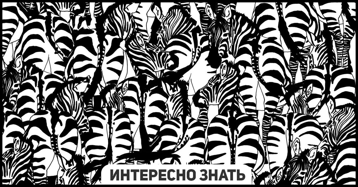 Найдите барсука: ошеломительная визуальная головоломка от BBC