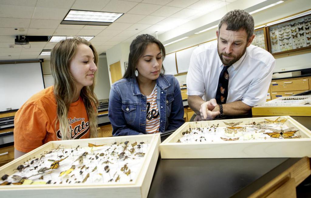 Энтомолог: профессия или призвание. Основные задачи, где учиться на энтомолога