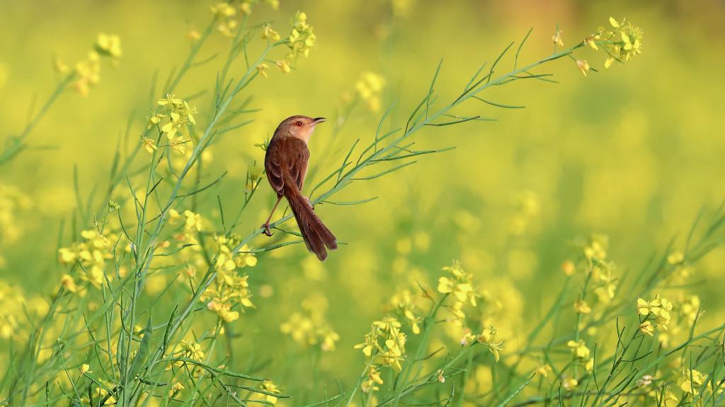 Цепи питания луга. Какие животные и растения распространены на лугах?