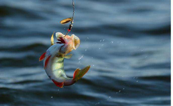Рыбалка в Магнитогорске. Где клюет, прогноз клева