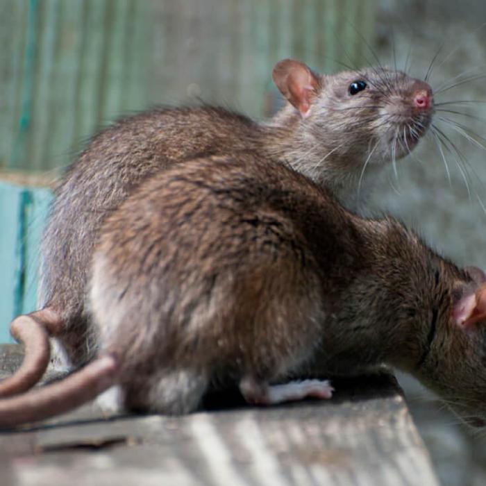 Животные знают, когда с ними обходятся несправедливо