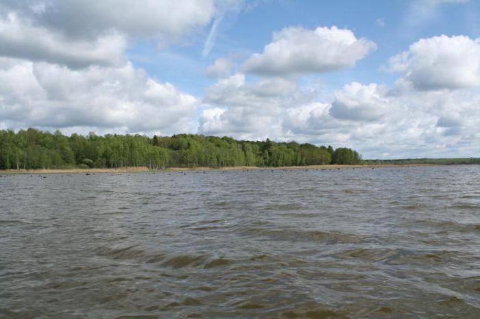 Рыбалка на Яузском водохранилище: фото и отзывы