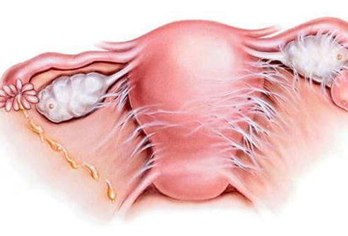 Венерологическое заболевание: основные симптомы, диагностика, лечение