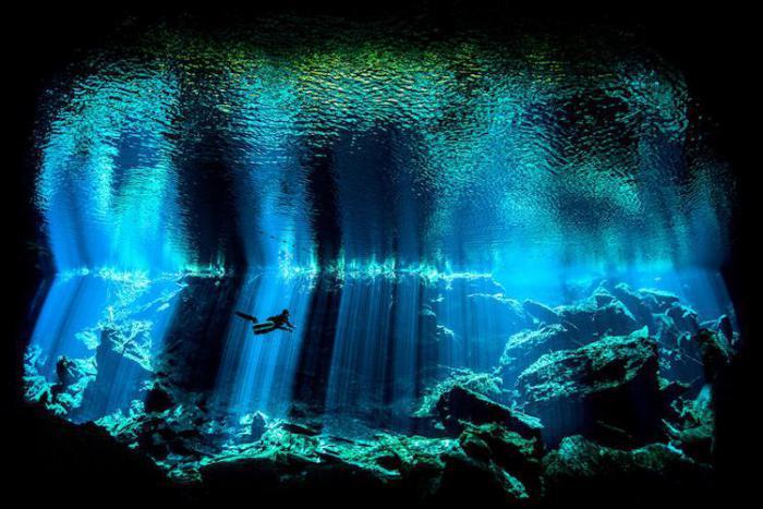 Удивительная красота: победители конкурса подводной фотографии