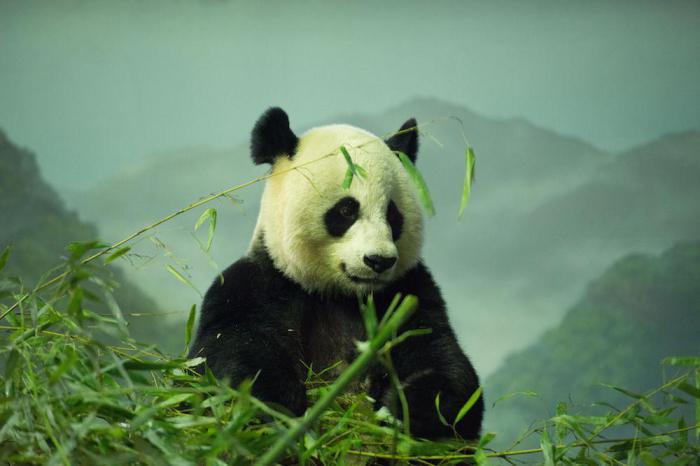 Массовое вымирание? В течение века исчезнет половина всех живых существ на планете