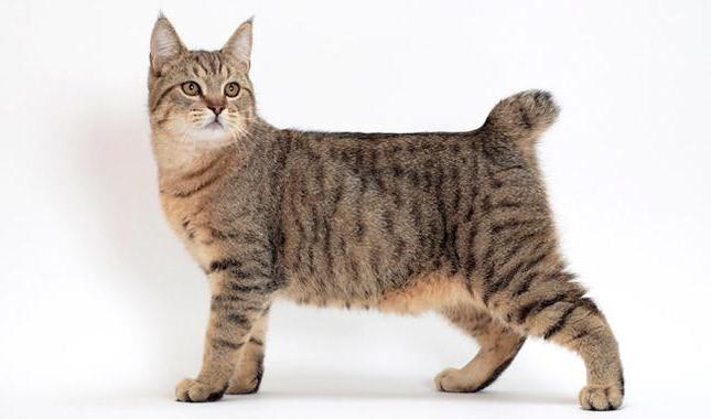 Кошка пятнистая: породы, описание, характер, содержание. Пятнистая домашняя кошка