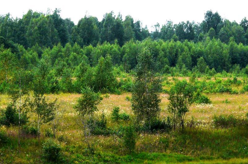 Что такое рекультивация? Направления рекультивации нарушенных земель