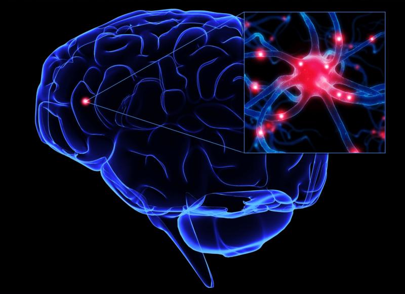 Нейронный механизм формирования внутреннего ресурса