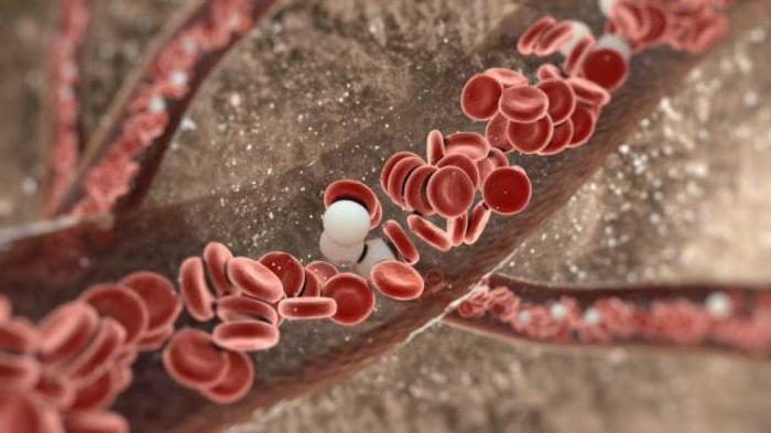 Продолжительность жизни лейкоцитов: жизненный цикл, образование и разрушение