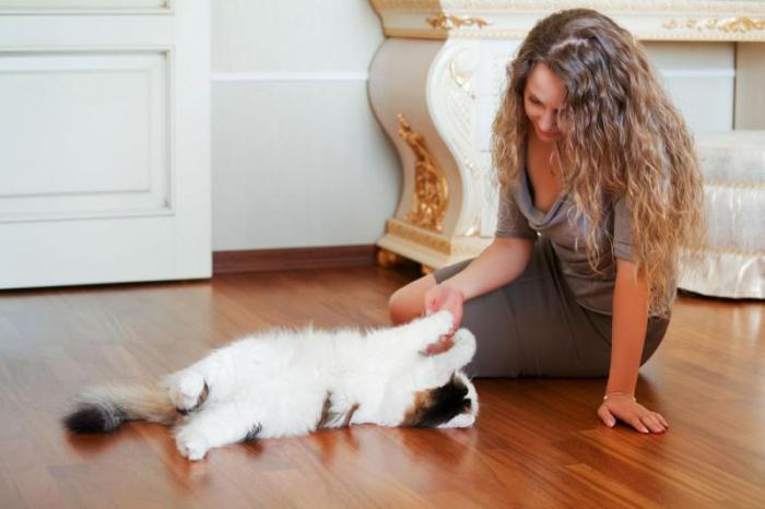 Может ли кот свести с ума?