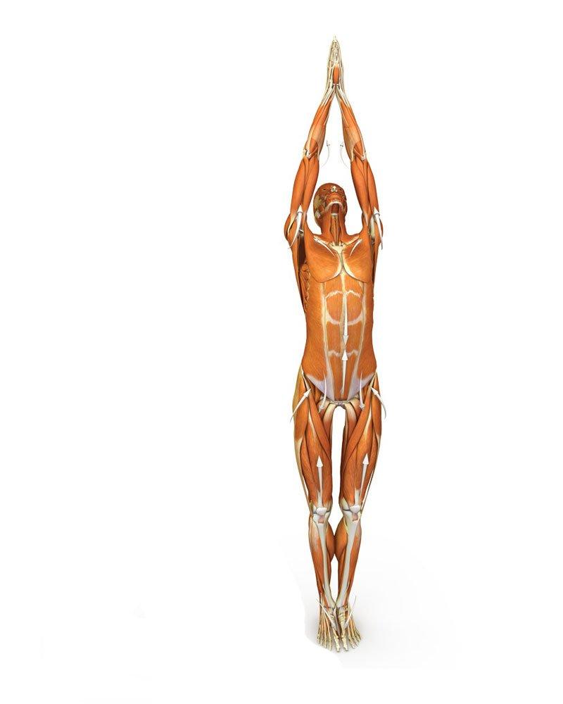 Упражнения Ба Дуань Цзин избавят от застойных явлений в организме