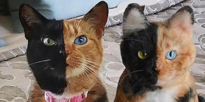 Какие млекопитающие были клонированы так же, как и Долли?