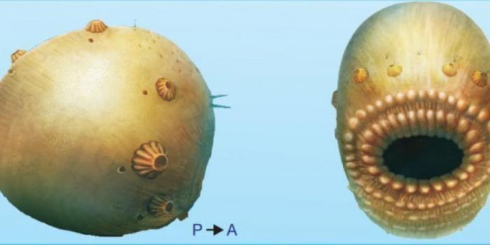 Ученые обнаружили самого старого предка человека