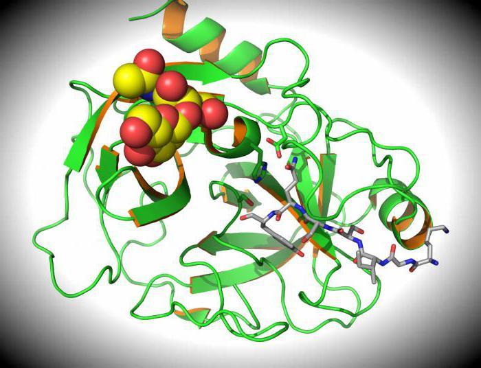 Что такое антиген: определение, виды. Антигены и антитела