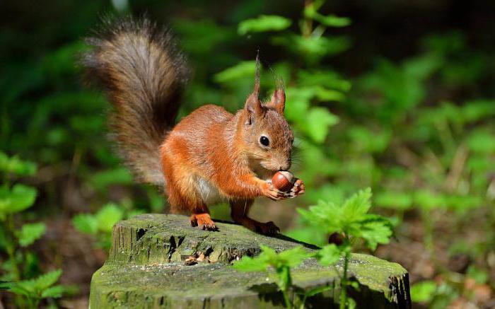 Загадки про природу, природные явления и животных. Детские загадки